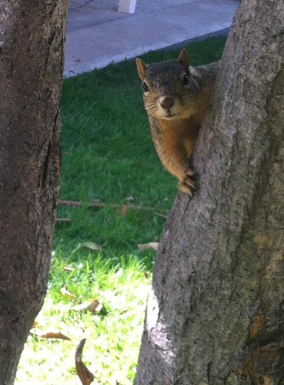 Friendly squirrels for neighbors